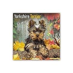 Yorkshire Terrier Puppies - Yorkshire Terrier Welpen 2021 - 16-Monatskalender mit freier DogDays-App