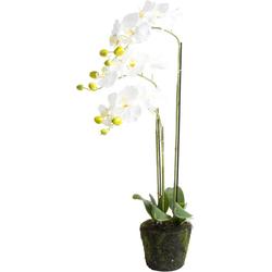 Kunstorchidee Orchidee Orchidee, Botanic-Haus, Höhe 75 cm