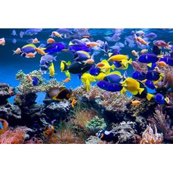 Papermoon Fototapete Aquarium, glatt 2,5 m x 1,86 m