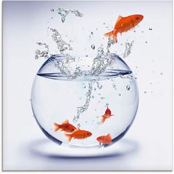 Artland Glasbild Goldfischaquarium, Wassertiere (1 Stück) 20 cm x 20 cm