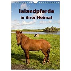 Islandpferde in ihrer Heimat (Wandkalender 2021 DIN A4 hoch)