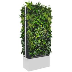 C+P Mobile Pflanzenwand für beidseitige Bepflanzung, b80xt40xh198cm