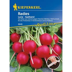 Radies / Radieschen Lucia, F1 - Saatband (0,56 € pro 1 m)