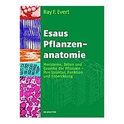 Esaus Pflanzenanatomie. Ray F. Evert  - Buch